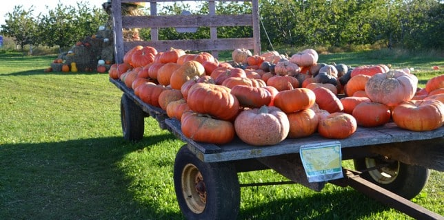 enjoy Ephraim WI lodging during Pumpkin Patch Festival in Egg Harbor