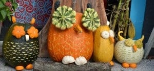 Enjoy Pumpkin Patch and Ephraim lodging